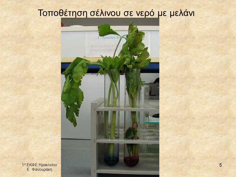 1 ο ΕΚΦΕ Ηρακλείου Ε. Φανουράκη http://1ekfe.ira.sch.gr/ mail@1ekfe.ira.sch.gr 5 Τοποθέτηση σέλινου σε νερό με μελάνι
