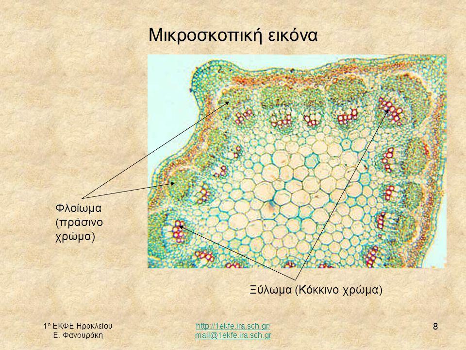 1 ο ΕΚΦΕ Ηρακλείου Ε. Φανουράκη http://1ekfe.ira.sch.gr/ mail@1ekfe.ira.sch.gr 8 Μικροσκοπική εικόνα Ξύλωμα (Κόκκινο χρώμα) Φλοίωμα (πράσινο χρώμα)