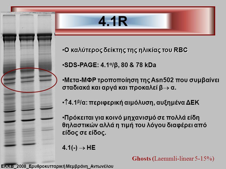 4.1R Ghosts (Laemmli-linear 5-15%) Ο καλύτερος δείκτης της ηλικίας του RBCΟ καλύτερος δείκτης της ηλικίας του RBC SDS-PAGE: 4.1 α /β, 80 & 78 kDa Μετα-ΜΦΡ τροποποίηση της Asn502 που συμβαίνει σταδιακά και αργά και προκαλεί β  α.