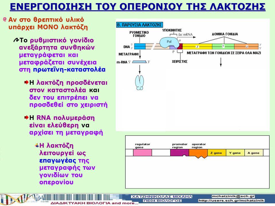 ΚΑΤΑΣΤΟΛΗ ΤΟΥ ΟΠΕΡΟΝΙΟΥ ΤΗΣ ΛΑΚΤΟΖΗΣ ρυθμιστικό γονίδιο ανεξάρτητα συνθηκών μεταγράφεται και μεταφράζεται συνέχεια στη πρωτεΐνη-καταστολέα Το ρυθμιστι