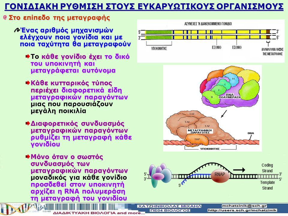 πολυπλοκότητας των ευκαρυωτικών κυττάρων Λόγω της πολυπλοκότητας των ευκαρυωτικών κυττάρων ελέγχεται προσεκτικά η ανάπτυξη των πολυκύτταρων οργανισμών