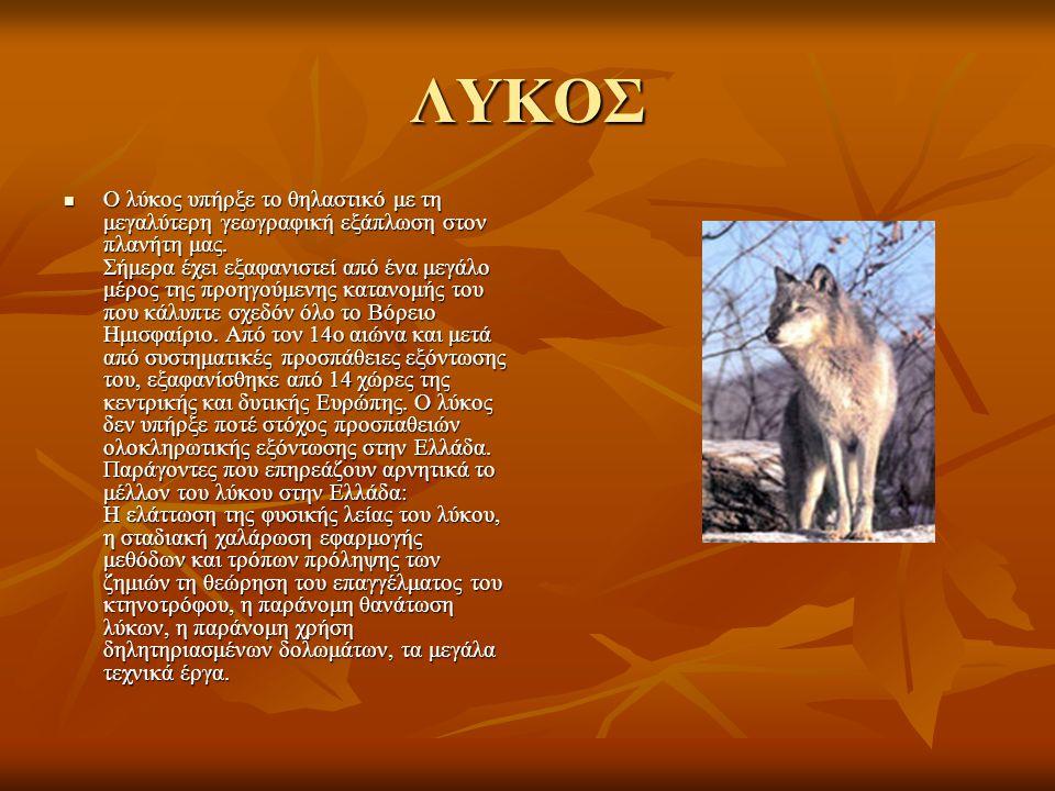 ΛΥΚΟΣ Ο λύκος υπήρξε το θηλαστικό με τη μεγαλύτερη γεωγραφική εξάπλωση στον πλανήτη μας. Σήμερα έχει εξαφανιστεί από ένα μεγάλο μέρος της προηγούμενης