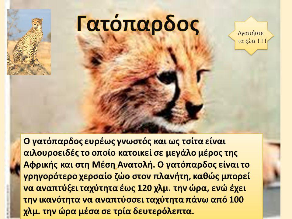 Ο γατόπαρδος ευρέως γνωστός και ως τσίτα είναι αιλουροειδές το οποίο κατοικεί σε μεγάλο μέρος της Αφρικής και στη Μέση Ανατολή.