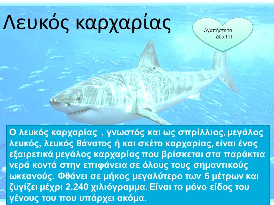 Ο λευκός καρχαρίας, γνωστός και ως σπρίλλιος, μεγάλος λευκός, λευκός θάνατος ή και σκέτο καρχαρίας, είναι ένας εξαιρετικά μεγάλος καρχαρίας που βρίσκε