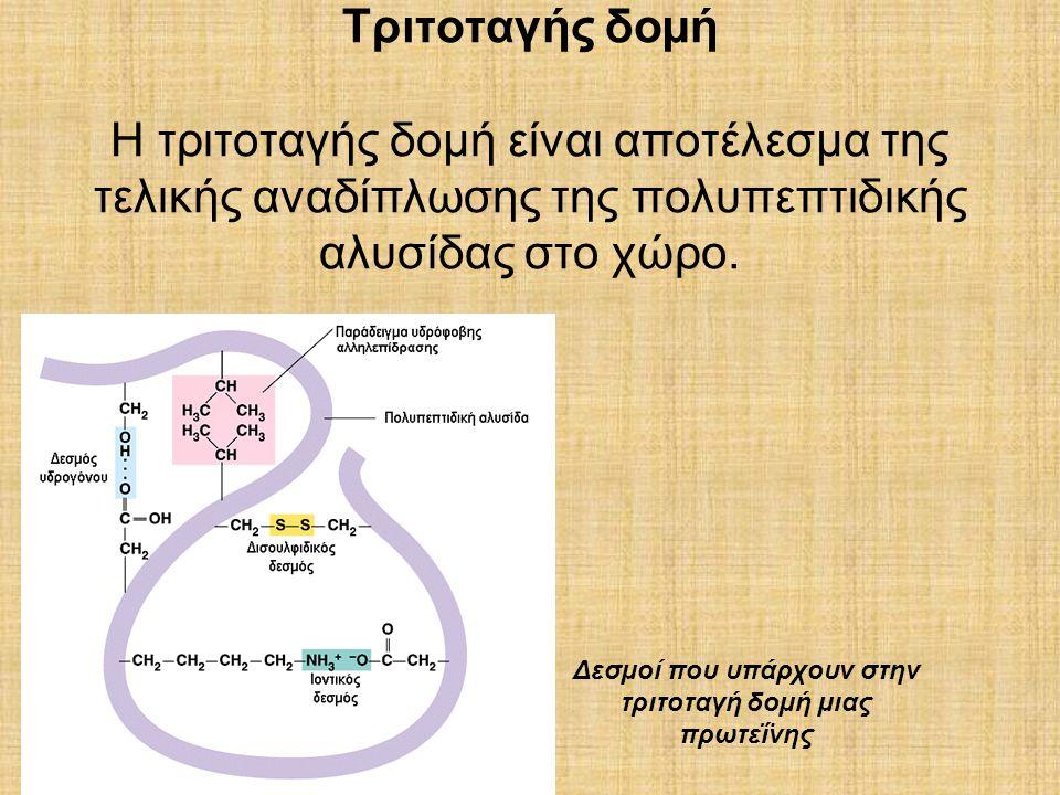 Τριτοταγής δοµή Η τριτοταγής δοµή είναι αποτέλεσµα της τελικής αναδίπλωσης της πολυπεπτιδικής αλυσίδας στο χώρο. Δεσµοί που υπάρχουν στην τριτοταγή δο