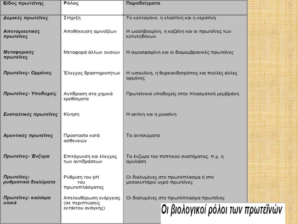 Οι πρωτεΐνες (βιοπολυμερή) αποτελούνται από απλά µόρια (μονομερή), τα αµινοξέα.