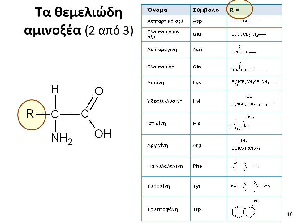 Τα θεμελιώδη αμινοξέα (2 από 3) 10