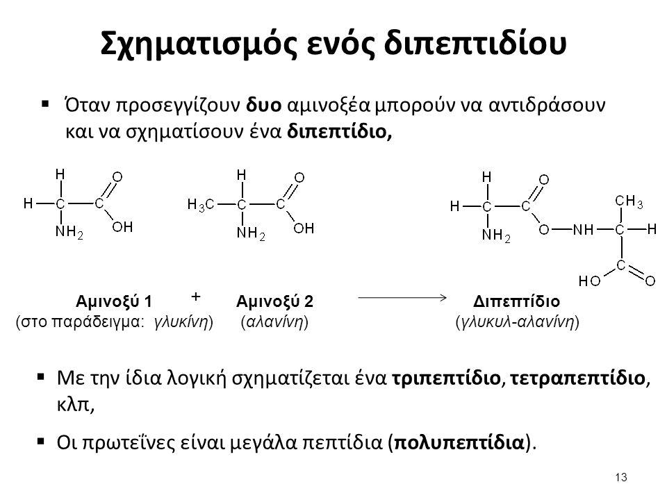 Σχηματισμός ενός διπεπτιδίου  Όταν προσεγγίζουν δυο αμινοξέα μπορούν να αντιδράσουν και να σχηματίσουν ένα διπεπτίδιο, + Αμινοξύ 1 (στο παράδειγμα: γ