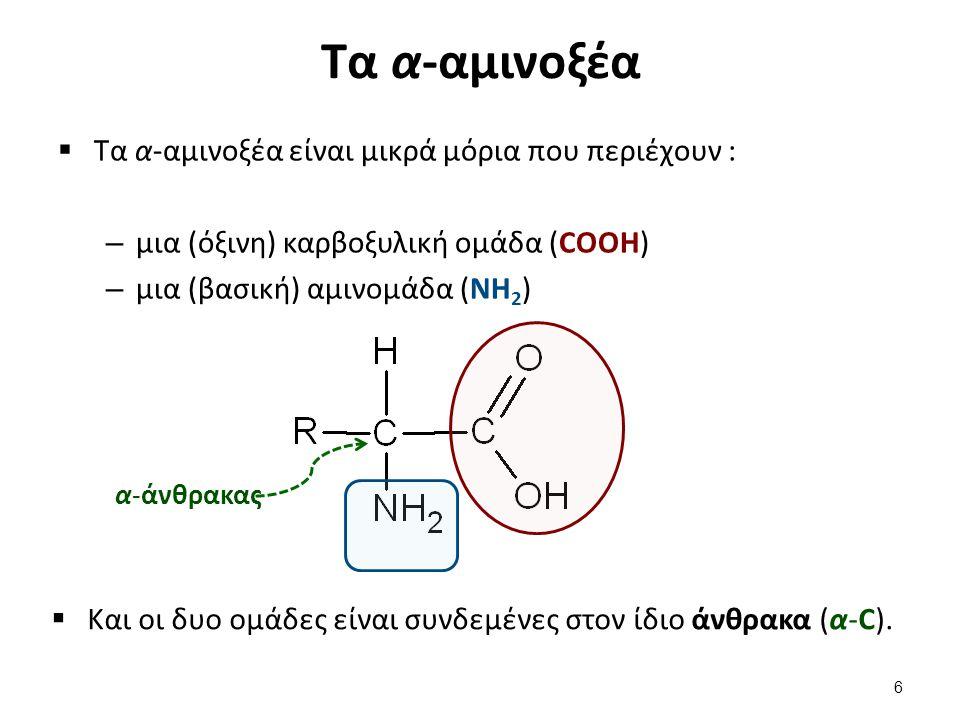Τα α-αμινοξέα  Τα α-αμινοξέα είναι μικρά μόρια που περιέχουν : – μια (όξινη) καρβοξυλική ομάδα (COOH) – μια (βασική) αμινομάδα (NH 2 ) α-άνθρακας  Κ