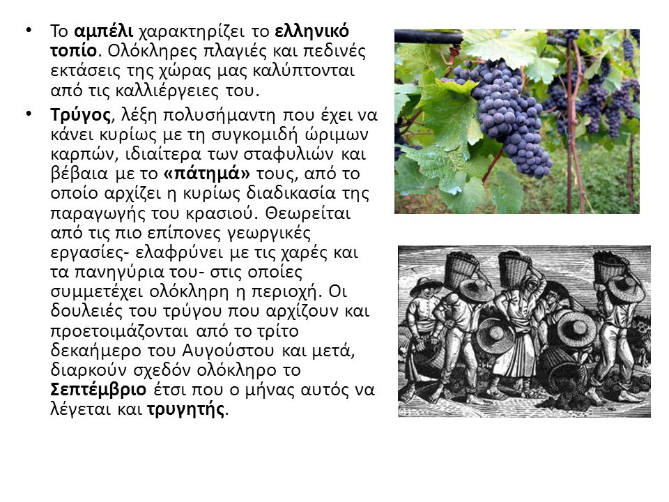 Το αμπέλι χαρακτηρίζει το ελληνικό τοπίο. Ολόκληρες πλαγιές και πεδινές εκτάσεις της χώρας μας καλύπτονται από τις καλλιέργειες του. Τρύγος, λέξη πολυ