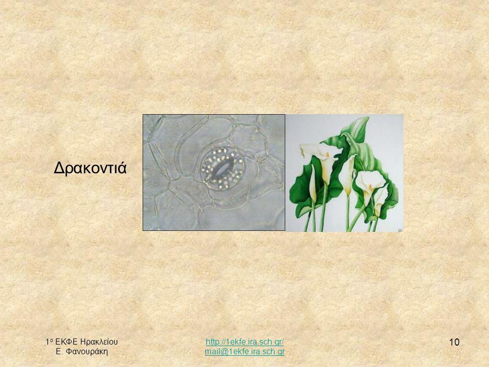 1 ο ΕΚΦΕ Ηρακλείου Ε. Φανουράκη http://1ekfe.ira.sch.gr/ mail@1ekfe.ira.sch.gr 10 Δρακοντιά