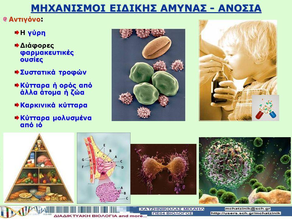 Αντιγόνο Αντιγόνο : γύρη Η γύρη φαρμακευτικές ουσίες Διάφορες φαρμακευτικές ουσίες Συστατικά τροφών Κύτταρα ή ορός από άλλα άτομα ή ζώα Καρκινικά κύτταρα Κύτταρα μολυσμένα από ιό ΜΗΧΑΝΙΣΜΟΙ ΕΙΔΙΚΗΣ ΑΜΥΝΑΣ - ΑΝΟΣΙΑ