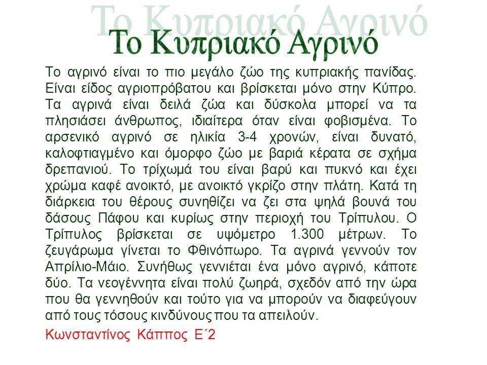 Το αγρινό είναι το πιο μεγάλο ζώο της κυπριακής πανίδας. Είναι είδος αγριοπρόβατου και βρίσκεται μόνο στην Κύπρο. Τα αγρινά είναι δειλά ζώα και δύσκολ
