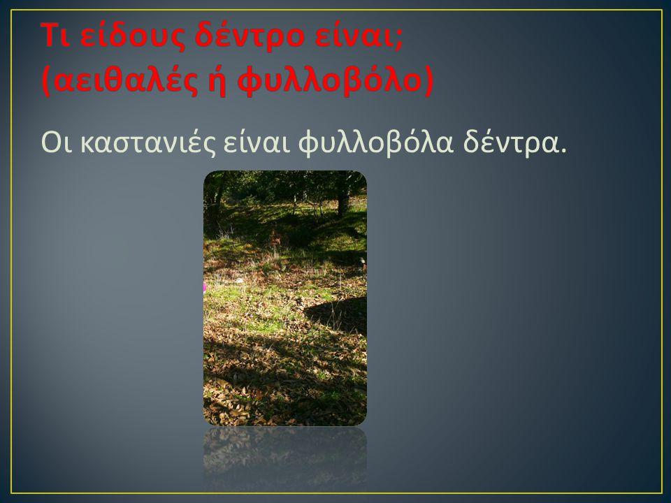Οι καστανιές είναι φυλλοβόλα δέντρα.