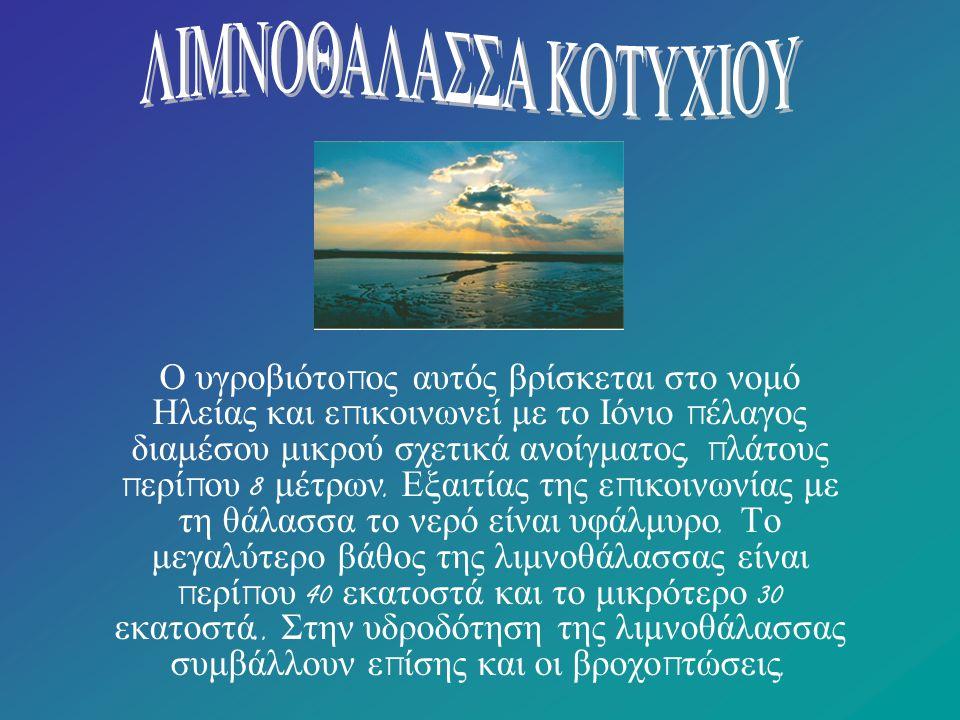 Η βλάστηση της περιοχής του Κοτυχίου Στη λιμνοθάλασσα Κοτυχίου βρίσκουν καταφύγιο και τροφή π ολλές αγριό π α π ιες αλλά και π αρυδάτια π ουλιά ό π ως βουτηχτάρια, νανογλάρονα, τσικνιάδες, φαλαρίδες, αλκυόνες.