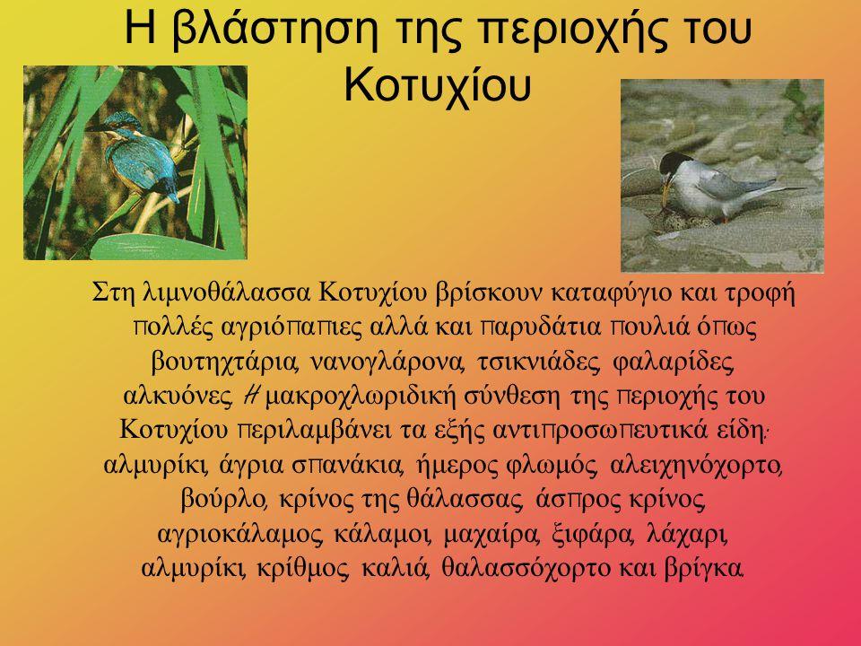 Η βλάστηση της περιοχής του Κοτυχίου Στη λιμνοθάλασσα Κοτυχίου βρίσκουν καταφύγιο και τροφή π ολλές αγριό π α π ιες αλλά και π αρυδάτια π ουλιά ό π ως