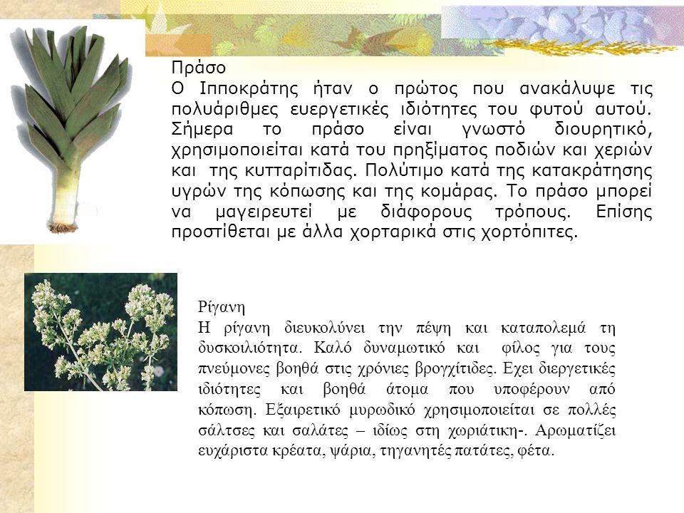 Σέλινο Στην αρχαιότητα σαν στεφάνι αντάμειβε τους νικητές της Νεμέας.