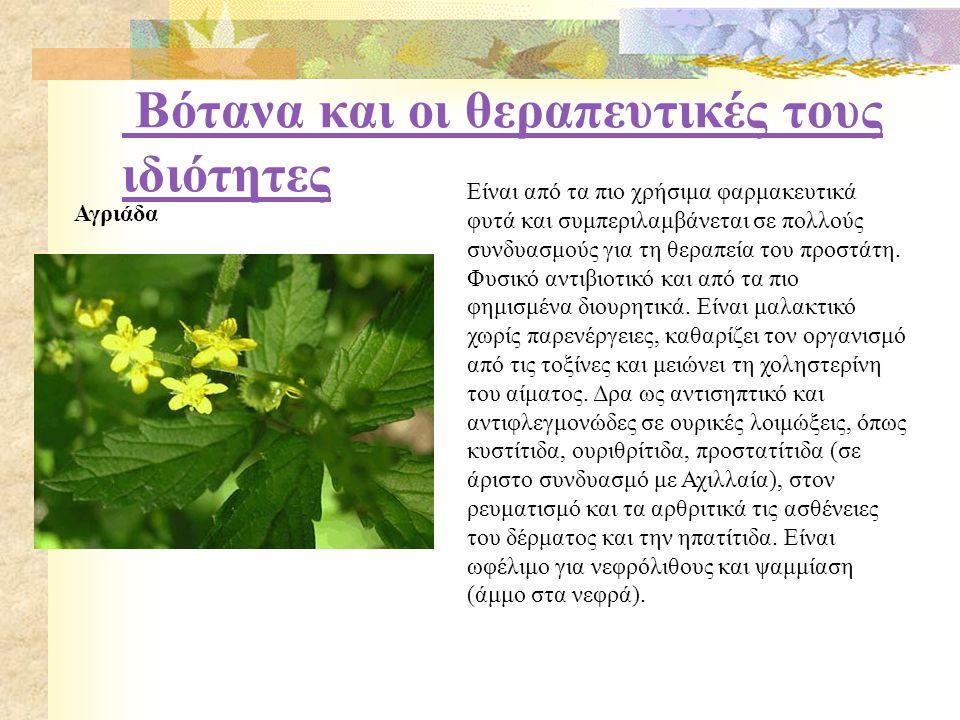 Βότανα και οι θεραπευτικές τους ιδιότητες Αγριάδα Είναι από τα πιο χρήσιμα φαρμακευτικά φυτά και συμπεριλαμβάνεται σε πολλούς συνδυασμούς για τη θεραπεία του προστάτη.