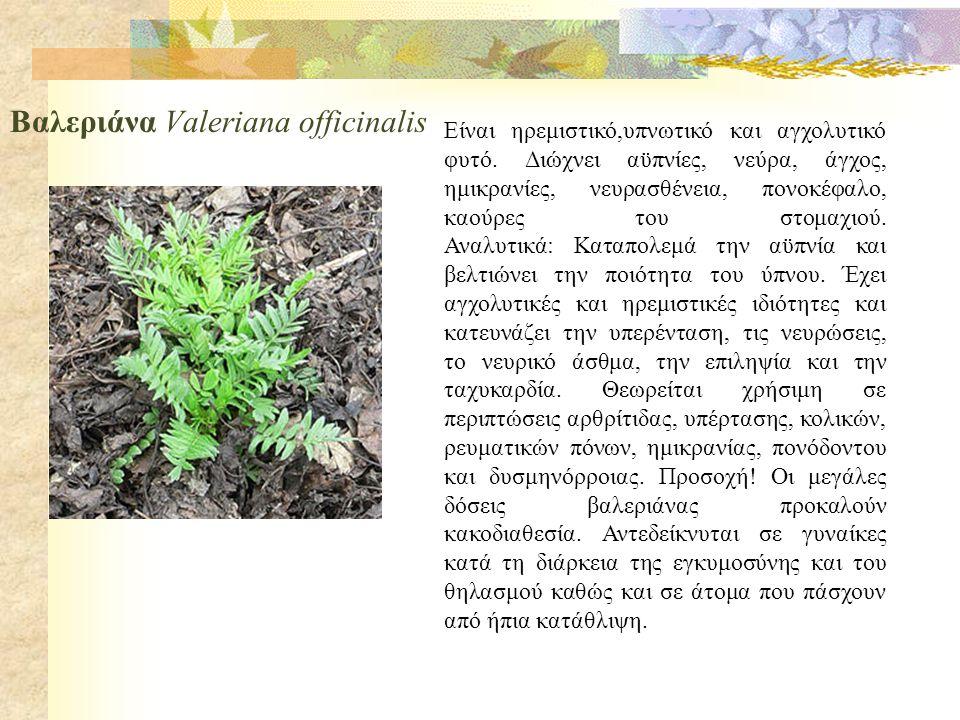 Καλιέργεια αρωματικών φυτών  Σκοπός της καλλιέργειας των αρωματικών και φαρμακευτικών φυτών είναι η παραγωγή αιθέριων ελαίων και ξηράς δρόγης.