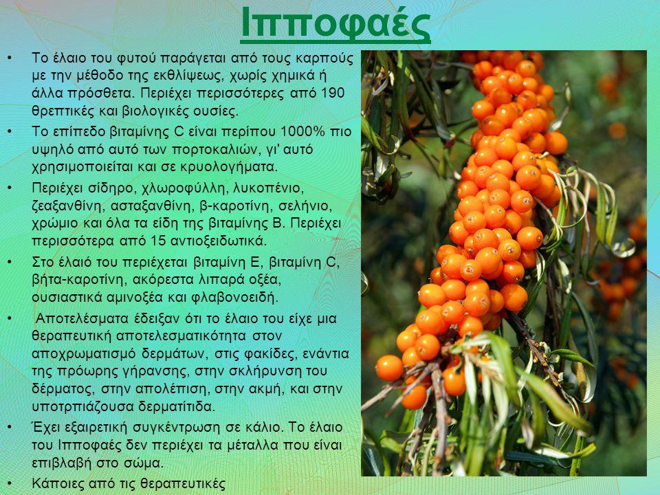 Ιπποφαές Το έλαιο του φυτού παράγεται από τους καρπούς με την μέθοδο της εκθλίψεως, χωρίς χημικά ή άλλα πρόσθετα.