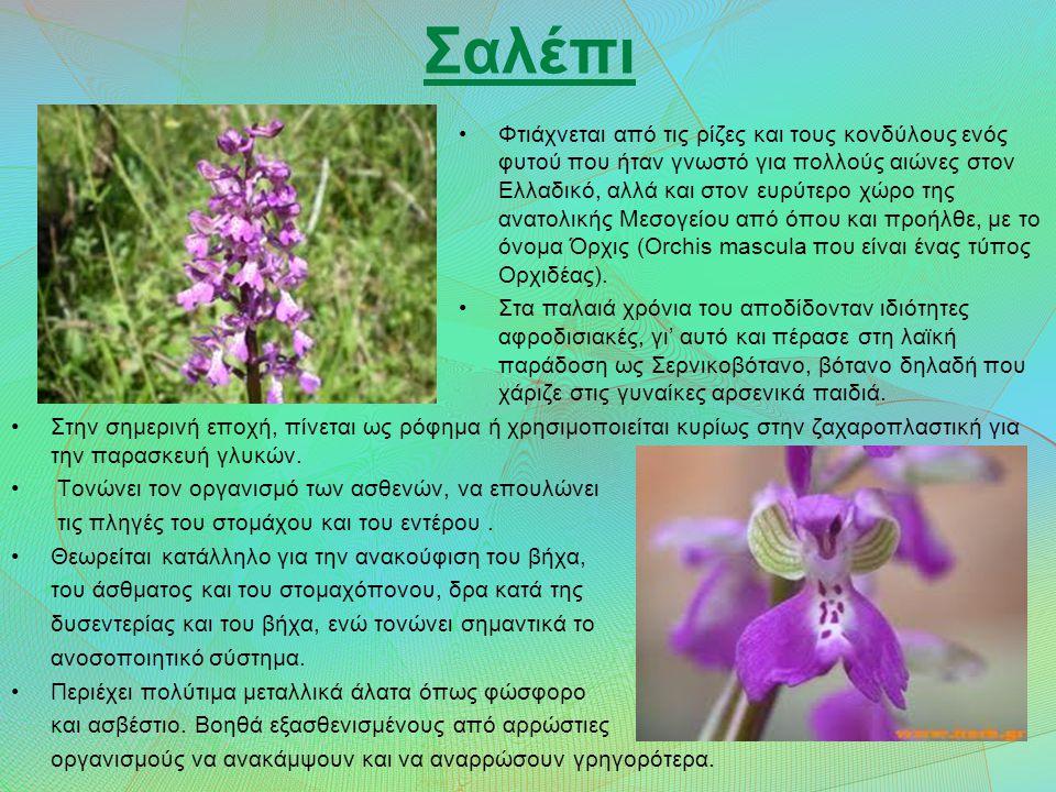 Σαλέπι Φτιάχνεται από τις ρίζες και τους κονδύλους ενός φυτού που ήταν γνωστό για πολλούς αιώνες στον Ελλαδικό, αλλά και στον ευρύτερο χώρο της ανατολικής Μεσογείου από όπου και προήλθε, με το όνομα Όρχις (Orchis mascula που είναι ένας τύπος Ορχιδέας).