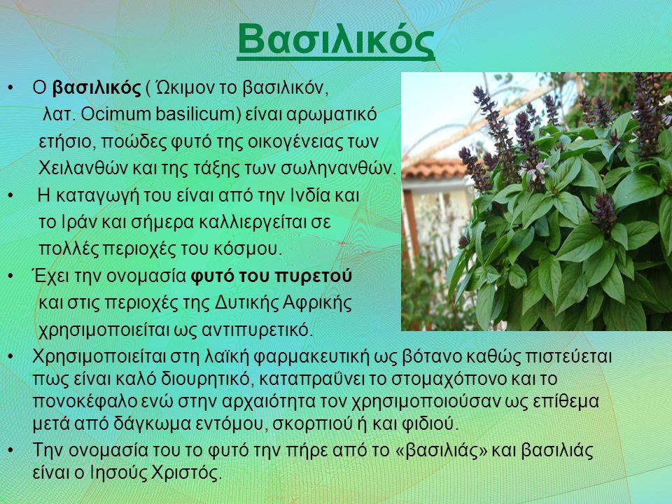 Φασκόμηλο Το επιστημονικό όνομα του φασκόμηλου (Salvia) προέρχεται από το λατινικό ρήμα Salvare που σημαίνει «σώζω» ή «θεραπεύω».