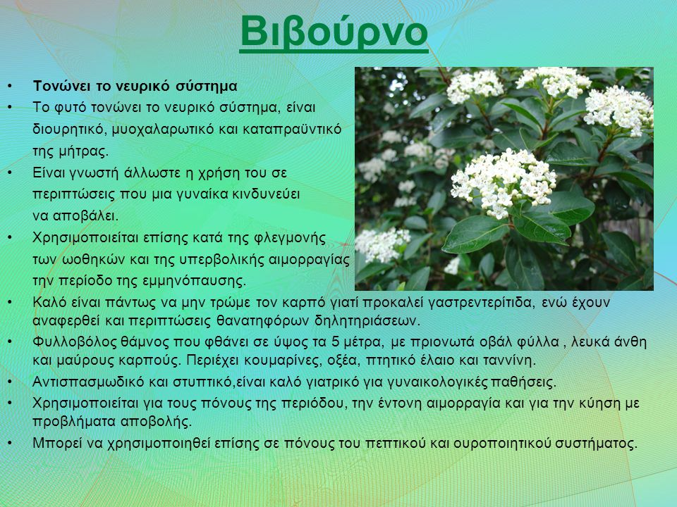Βιβούρνο Τονώνει το νευρικό σύστημα Το φυτό τονώνει το νευρικό σύστημα, είναι διουρητικό, μυοχαλαρωτικό και καταπραϋντικό της μήτρας.
