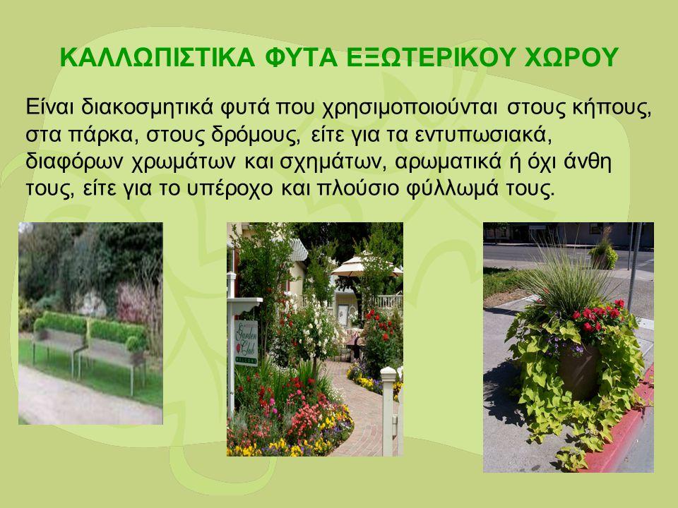 ΚΑΛΛΩΠΙΣΤΙΚΑ ΦΥΤΑ ΕΞΩΤΕΡΙΚΟΥ ΧΩΡΟΥ Είναι διακοσμητικά φυτά που χρησιμοποιούνται στους κήπους, στα πάρκα, στους δρόμους, είτε για τα εντυπωσιακά, διαφό