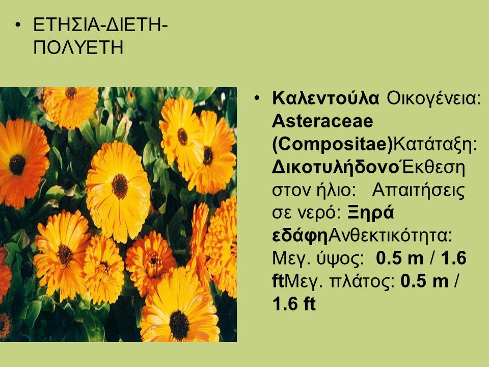 ΕΤΗΣΙΑ-ΔΙΕΤΗ- ΠΟΛΥΕΤΗ Καλεντούλα Οικογένεια: Asteraceae (Compositae)Κατάταξη: ΔικοτυλήδονοΈκθεση στον ήλιο: Απαιτήσεις σε νερό: Ξηρά εδάφηΑνθεκτικότητ