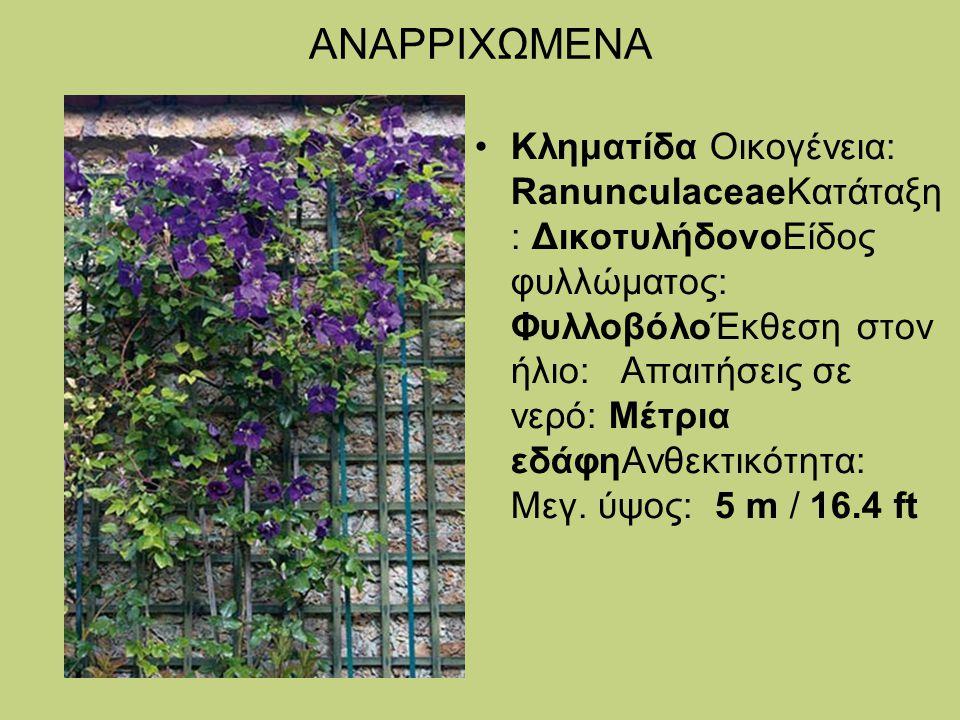 ΑΝΑΡΡΙΧΩΜΕΝΑ Κληματίδα Οικογένεια: RanunculaceaeΚατάταξη : ΔικοτυλήδονοΕίδος φυλλώματος: ΦυλλοβόλοΈκθεση στον ήλιο: Απαιτήσεις σε νερό: Μέτρια εδάφηΑν