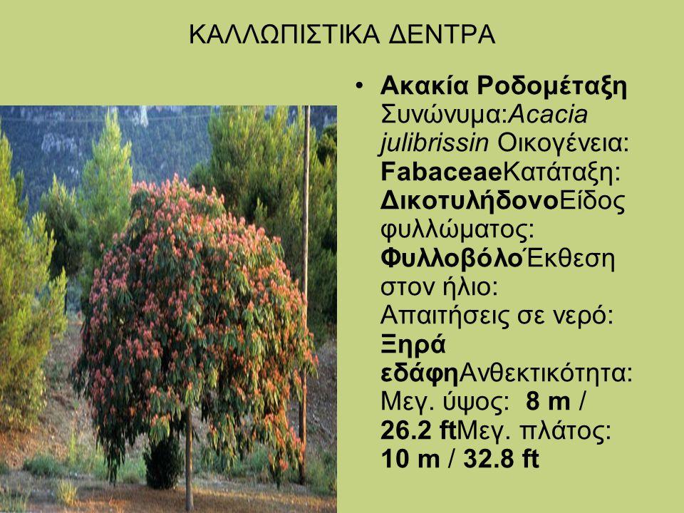 ΚΑΛΛΩΠΙΣΤΙΚΑ ΔΕΝΤΡΑ Ακακία Ροδομέταξη Συνώνυμα:Acacia julibrissin Οικογένεια: FabaceaeΚατάταξη: ΔικοτυλήδονοΕίδος φυλλώματος: ΦυλλοβόλοΈκθεση στον ήλι