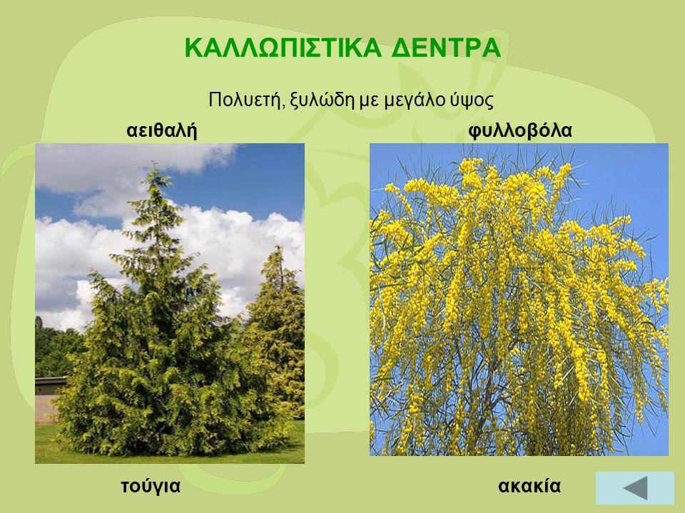 ΕΤΗΣΙΑ-ΔΙΕΤΗ- ΠΟΛΥΕΤΗ Καλεντούλα Οικογένεια: Asteraceae (Compositae)Κατάταξη: ΔικοτυλήδονοΈκθεση στον ήλιο: Απαιτήσεις σε νερό: Ξηρά εδάφηΑνθεκτικότητα: Μεγ.