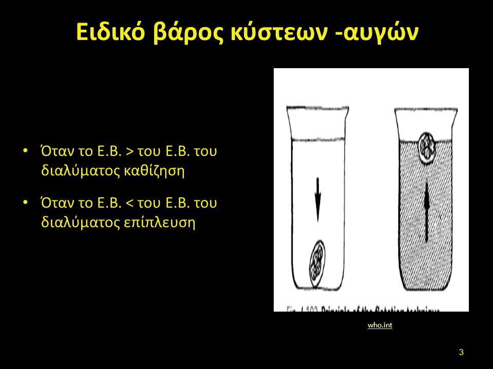 Ειδικό βάρος κύστεων -αυγών Όταν το Ε.Β.> του Ε.Β.