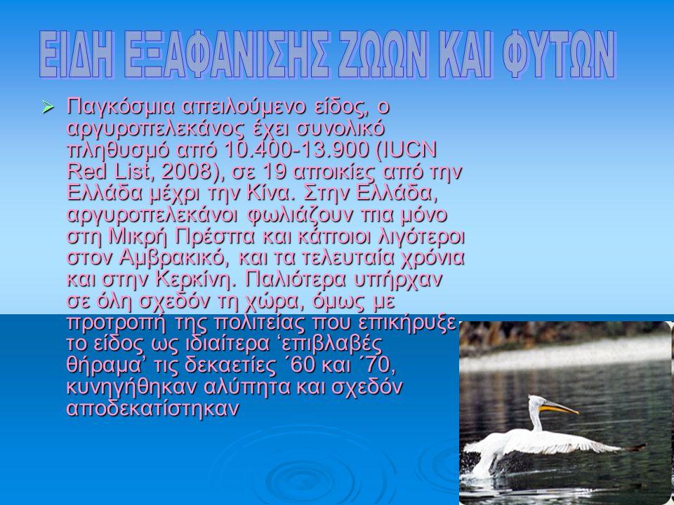 ΠΠΠΠαγκόσμια απειλούμενο είδος, ο αργυροπελεκάνος έχει συνολικό πληθυσμό από 10.400-13.900 (IUCN Red List, 2008), σε 19 αποικίες από την Ελλάδα μέ