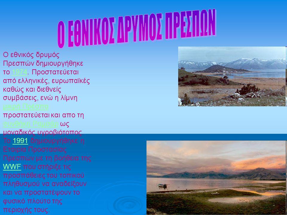 Ο εθνικός δρυμός Πρεσπών δημιουργήθηκε το 1974. Προστατεύεται από ελληνικές, ευρωπαϊκές καθώς και διεθνείς συμβάσεις, ενώ η λίμνη μικρή Πρέσπα προστατ