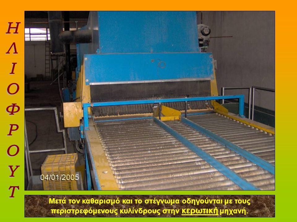 Υπότιτλος Μετά τον καθαρισμό και το στέγνωμα οδηγούνται με τους περιστρεφόμενους κυλίνδρους στην κερωτική μηχανή.