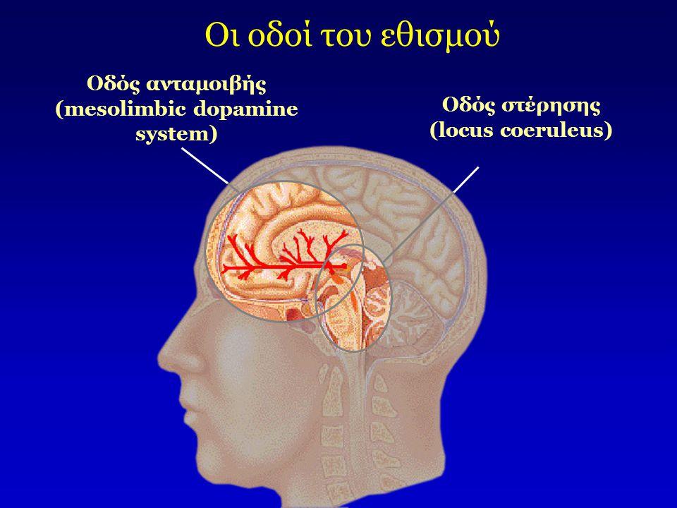 Οδός ανταμοιβής (mesolimbic dopamine system) Οδός στέρησης (locus coeruleus) Οι οδοί του εθισμού