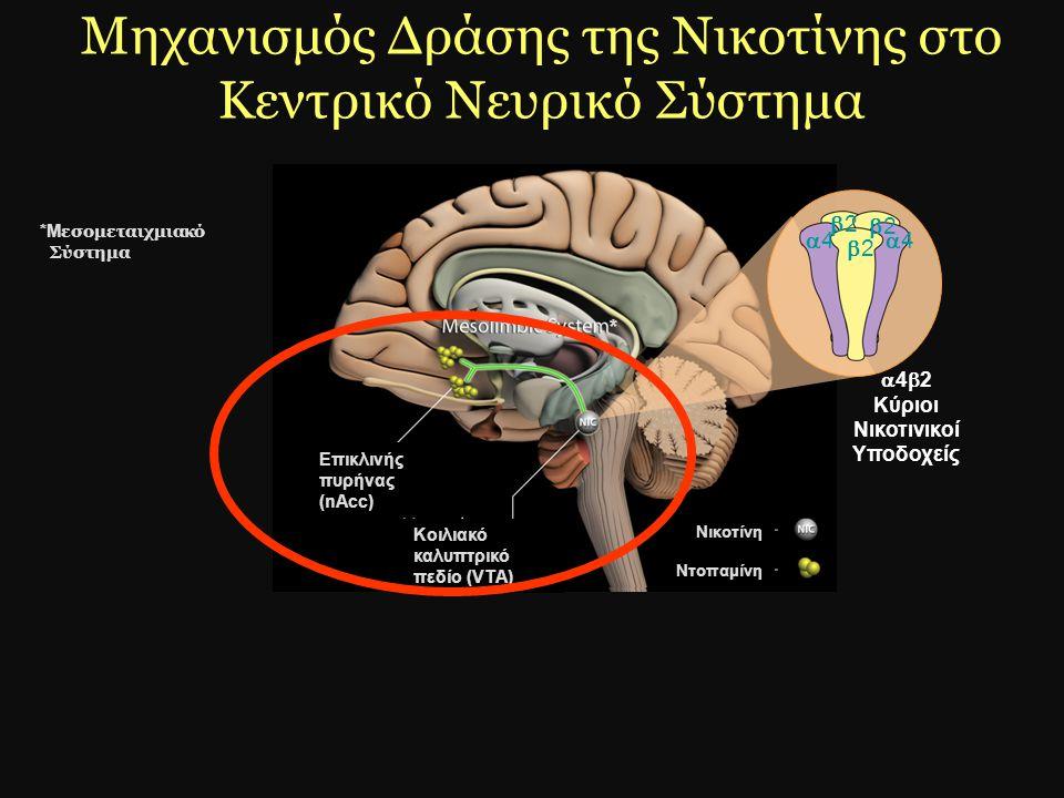 Μηχανισμός Δράσης της Νικοτίνης στο Κεντρικό Νευρικό Σύστημα 44 22 22 22 44  4  2 Κύριοι Νικοτινικοί Υποδοχείς Κοιλιακό καλυπτρικό πεδίο (