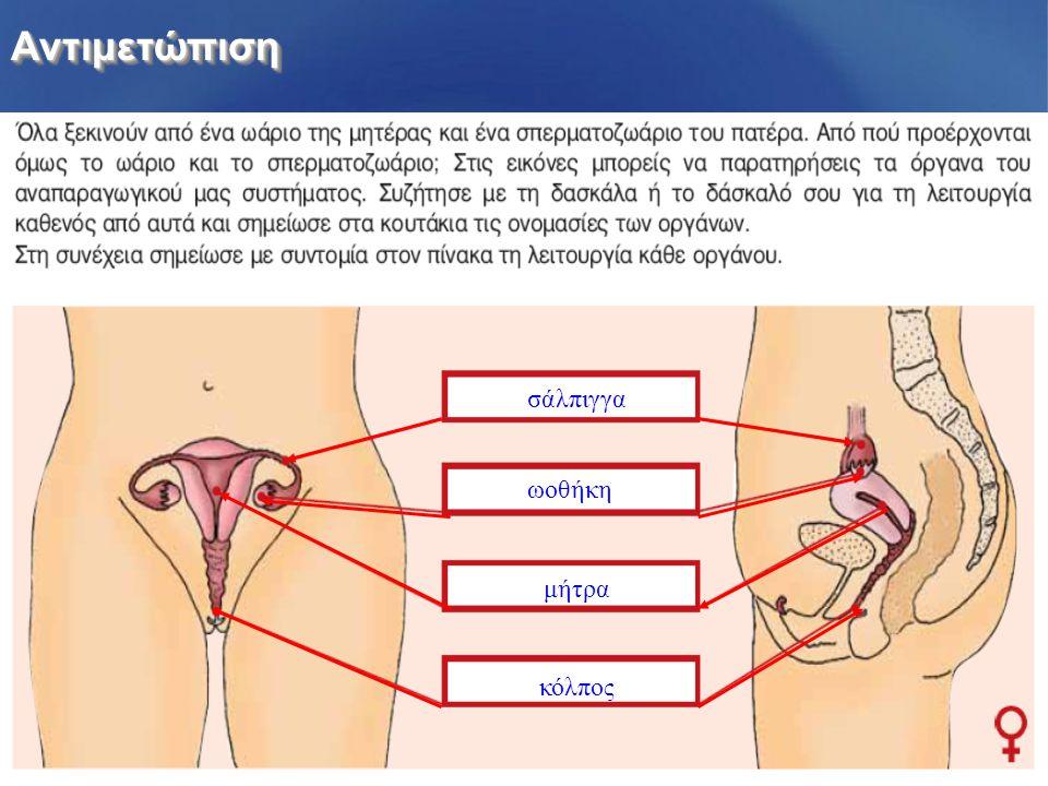 ΑντιμετώπισηΑντιμετώπιση σάλπιγγα ωοθήκη μήτρα κόλπος