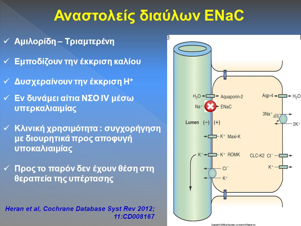 Αναστολείς διαύλων ENaC Αμιλορίδη – Τριαμτερένη Εμποδίζουν την έκκριση καλίου Δυσχεραίνουν την έκκριση H + Εν δυνάμει αίτια ΝΣΟ IV μέσω υπερκαλιαιμίας Κλινική χρησιμότητα : συγχορήγηση με διουρητικά προς αποφυγή υποκαλιαιμίας Προς το παρόν δεν έχουν θέση στη θεραπεία της υπέρτασης Heran et al, Cochrane Database Syst Rev 2012; 11:CD008167