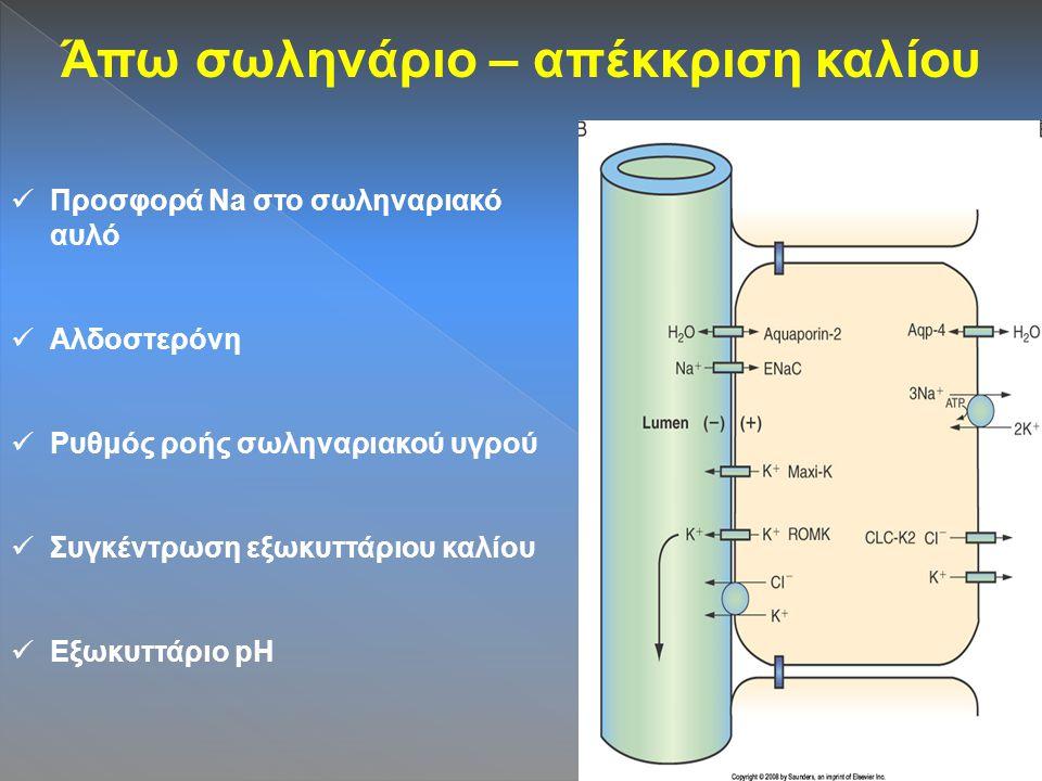 Άπω σωληνάριο – απέκκριση καλίου Προσφορά Na στο σωληναριακό αυλό Αλδοστερόνη Ρυθμός ροής σωληναριακού υγρού Συγκέντρωση εξωκυττάριου καλίου Εξωκυττάριο pH