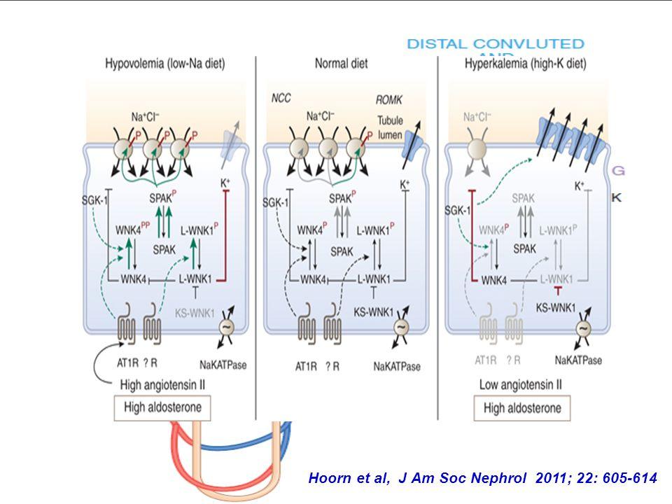 Hoorn et al, J Am Soc Nephrol 2011; 22: 605-614