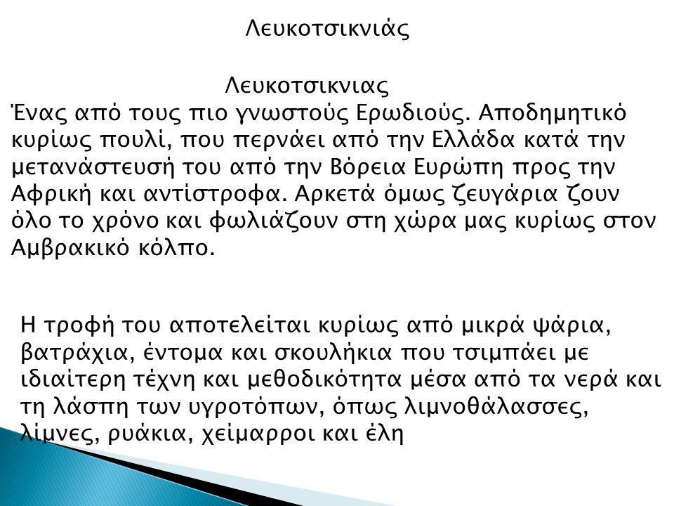 Λευκοτσικνιάς Λευκοτσικνιας Ένας από τους πιο γνωστούς Ερωδιούς. Αποδημητικό κυρίως πουλί, που περνάει από την Ελλάδα κατά την μετανάστευσή του από τη
