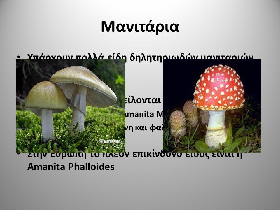 Μανιτάρια Υπάρχουν πολλά είδη δηλητηριωδών μανιταριών – Amanita muscaria – Amanita phalloides Οι δηλητηριάσεις οφείλονται σε τοξίνες – Μουσκαρίνη για