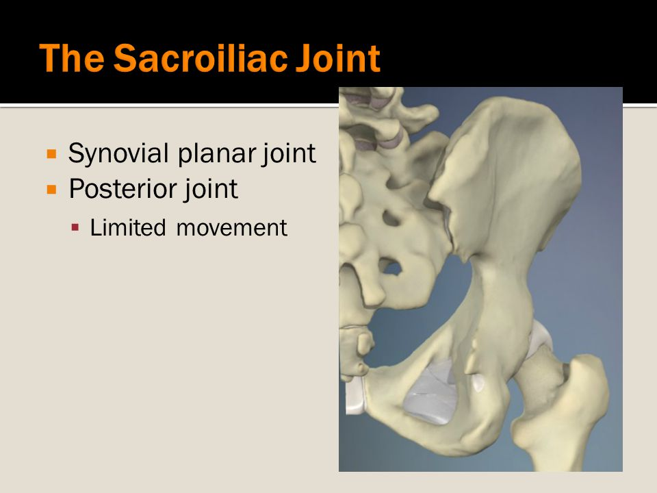  Synovial planar joint  Posterior joint  Limited movement