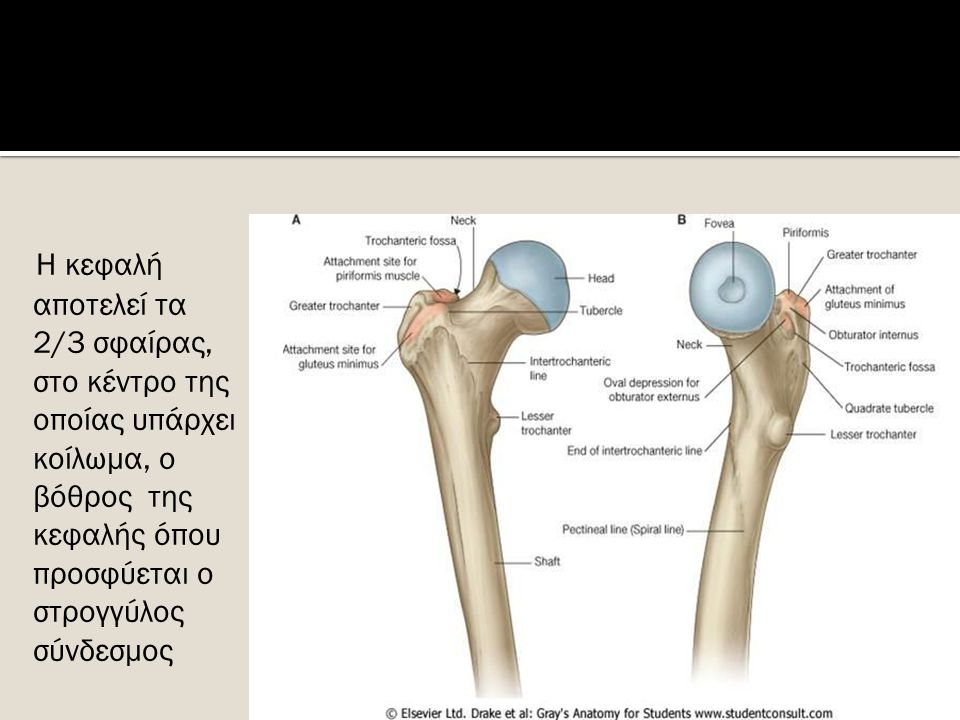  Synovial planar joint  Posterior joint  Limited movement