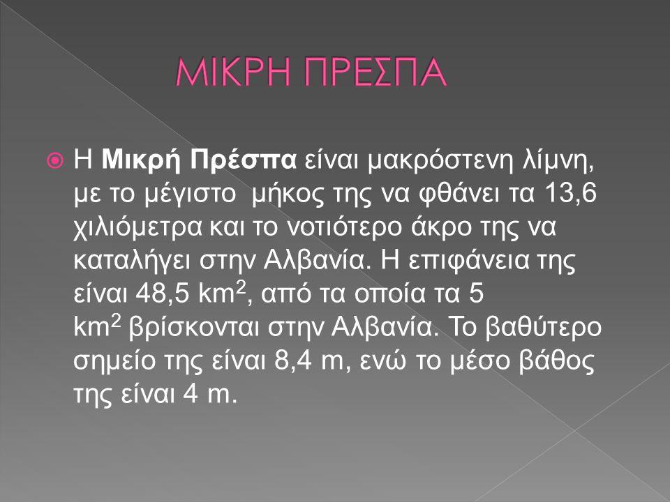  Η Μικρή Πρέσπα είναι μακρόστενη λίμνη, με το μέγιστο μήκος της να φθάνει τα 13,6 χιλιόμετρα και το νοτιότερο άκρο της να καταλήγει στην Αλβανία. Η ε