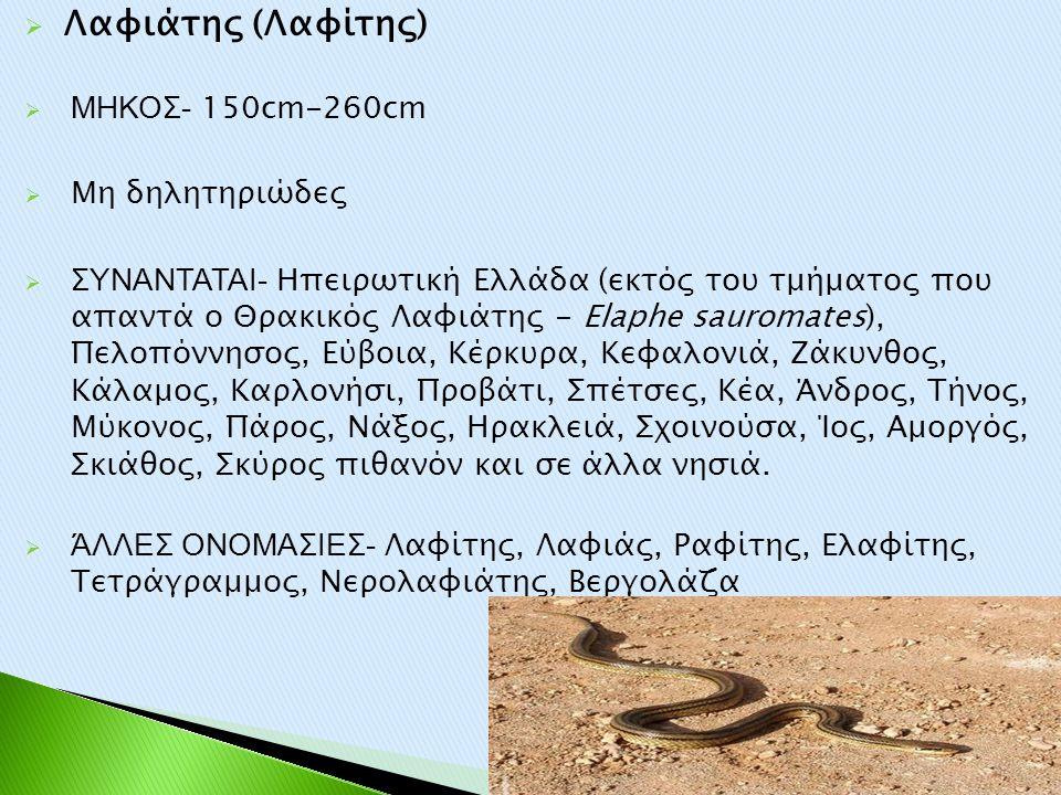  Λαφιάτης (Λαφίτης)  ΜΗΚΟΣ- 150cm-260cm  Μη δηλητηριώδες  ΣΥΝΑΝΤΑΤΑΙ- Ηπειρωτική Ελλάδα (εκτός του τμήματος που απαντά ο Θρακικός Λαφιάτης - Elaph
