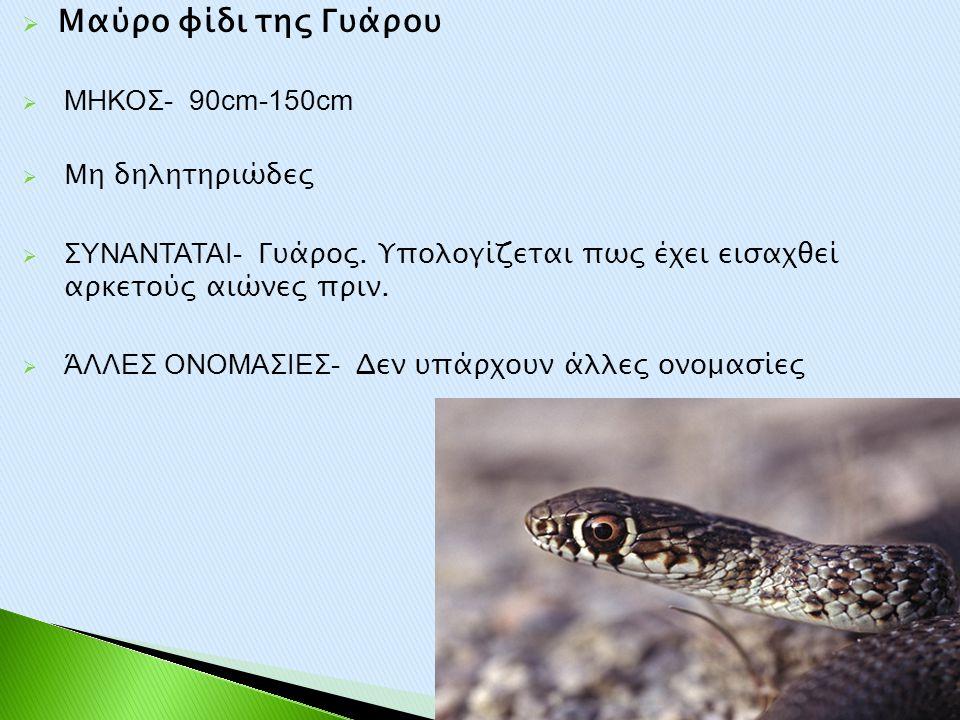  Μαύρο φίδι της Γυάρου  ΜΗΚΟΣ- 90cm-150cm  Μη δηλητηριώδες  ΣΥΝΑΝΤΑΤΑΙ- Γυάρος. Υπολογίζεται πως έχει εισαχθεί αρκετούς αιώνες πριν.  ΆΛΛΕΣ ΟΝΟΜΑ