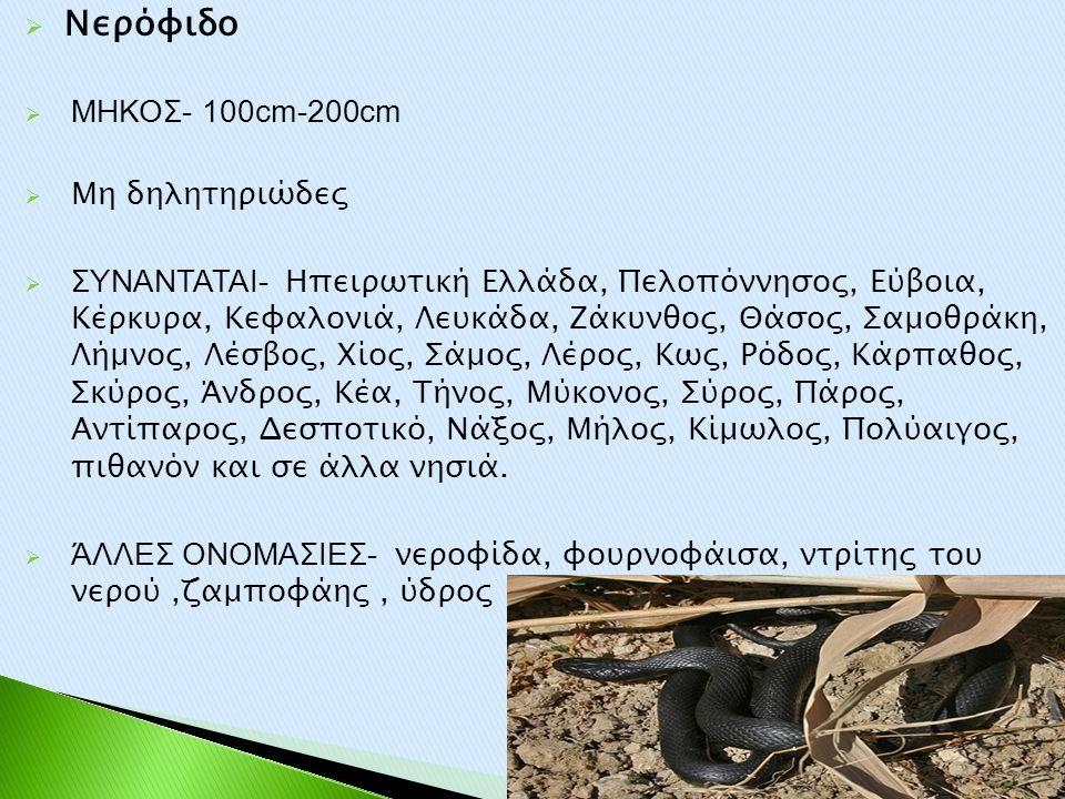  Νερόφιδο  ΜΗΚΟΣ- 100cm-200cm  Μη δηλητηριώδες  ΣΥΝΑΝΤΑΤΑΙ- Ηπειρωτική Ελλάδα, Πελοπόννησος, Εύβοια, Κέρκυρα, Κεφαλονιά, Λευκάδα, Ζάκυνθος, Θάσος,